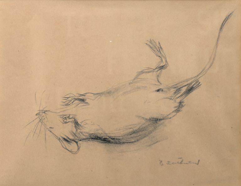 Dead Mouse (courtesy of NBM Collection)